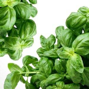 The 9 Easiest Herbs to Grow Indoors