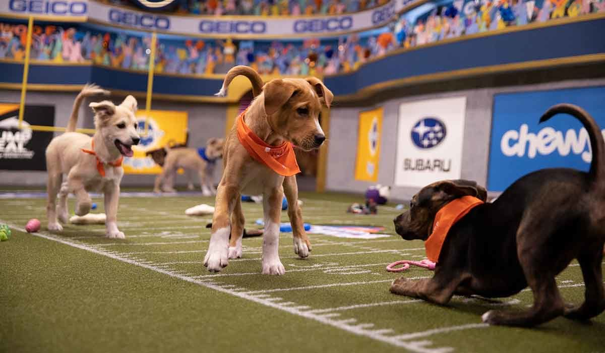 Tailgate with Your Pets for Puppy Bowl XVI on Animal Planet