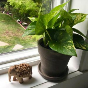 lunarly monthly subscription box houseplant