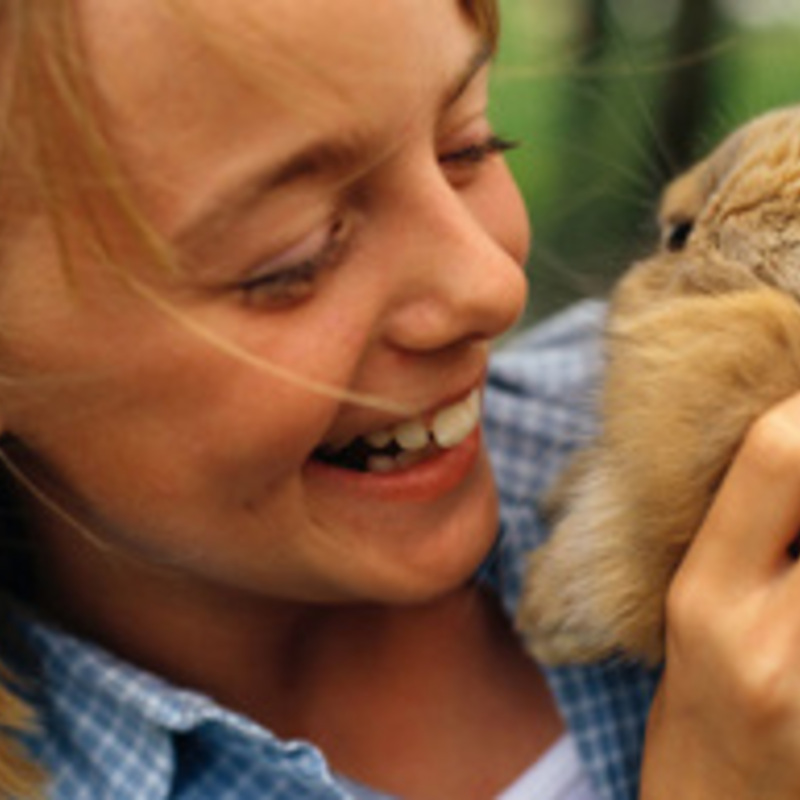 Giving Live Rabbits as Easter Gifts