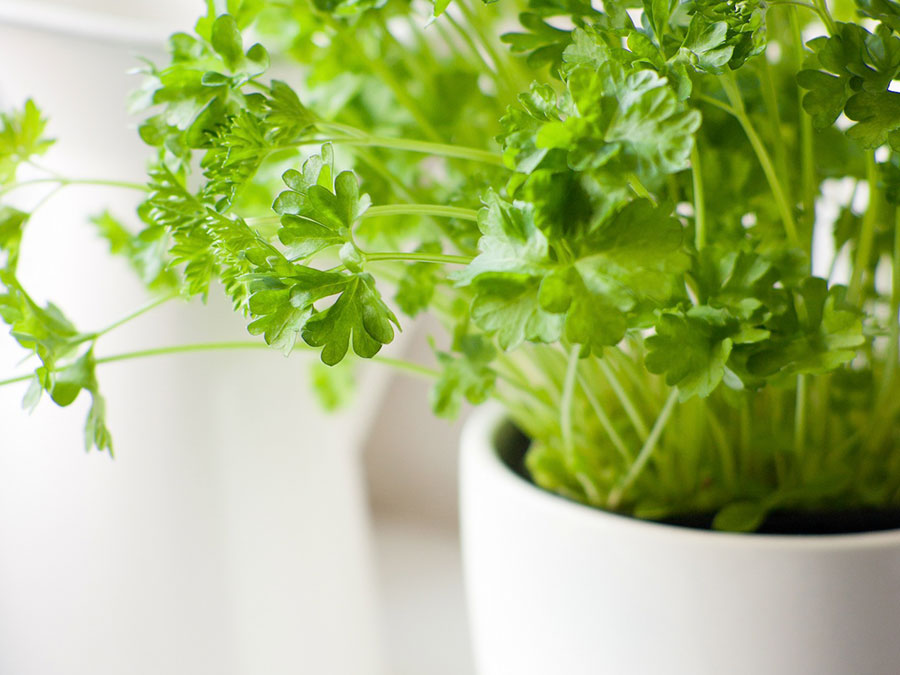 The 9 Easiest Herbs To Grow Indoors More