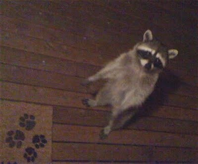 They Shoot Raccoons, Don't They?